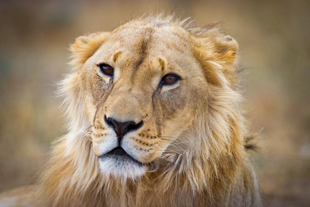 Paarl, Drakenstein Lion Park