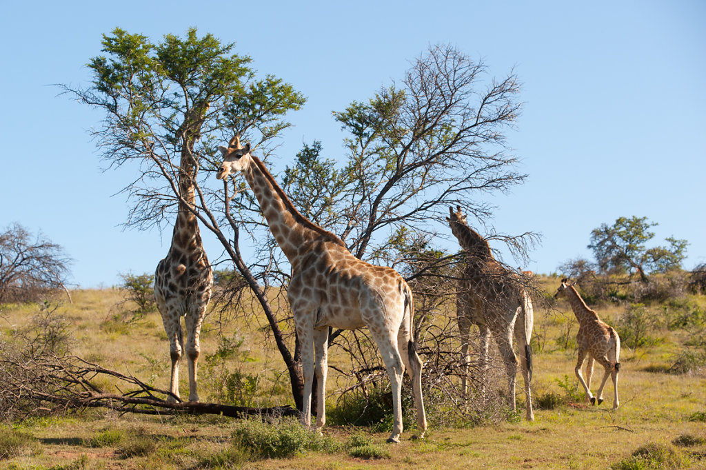 Schotia Safaris Private Game Reserve